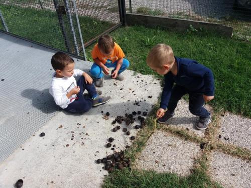 la raccolta delle noci